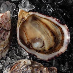 1 pkg. Fresh Kusshi Oysters